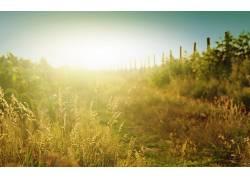 摄影,壁纸,植物,路径,篱笆,景深,太阳,夏季320974