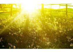 摄影,壁纸,植物,领域,夏季,阳光327845