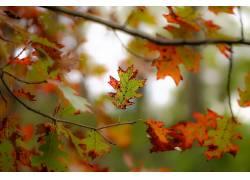 植物,树叶,壁纸,树木,秋季584915
