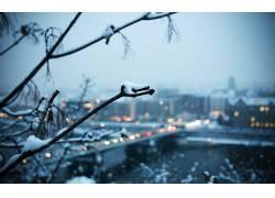 市容,雪,植物,背景虚化,科,冬季21482