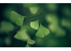 绿色,宏,树叶,植物,科7318