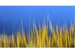 数字艺术,蓝色背景,植物400924