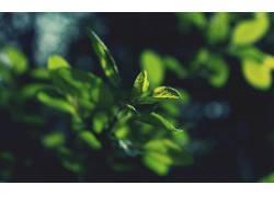 植物,树叶,宏,阳光,背景虚化,黑暗386878