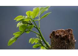 植物,树叶,木138606