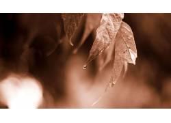 树叶,水滴,乌贼,植物,背景虚化116027