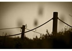 摄影,壁纸,篱笆,木,草,植物,乌贼,线,模糊387488图片