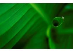 绿色,树叶,壁纸,植物531154
