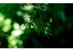 植物,树叶,背景虚化602206