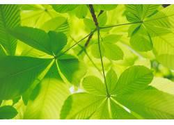 绿色,树叶,壁纸,植物658131
