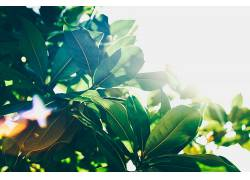 绿色,树叶,壁纸,阳光,植物660380图片