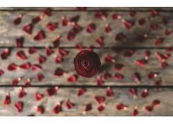 植物,树叶,花卉,红色的花朵493909