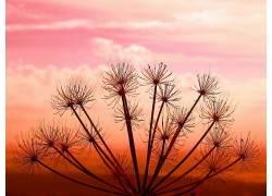 日落,植物,壁纸,云,天空388415图片