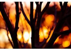 日落,植物,背景虚化567699
