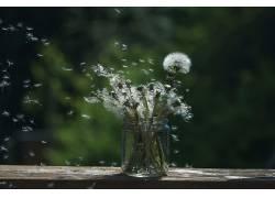 绿色,植物,花卉571537