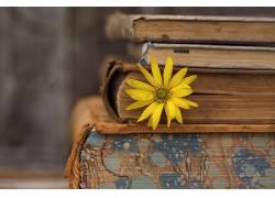 旧,图书,花卉,黄色的花朵674892