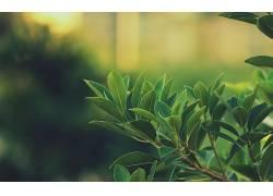树叶,绿色,景深,壁纸,宏,模糊,植物,背景虚化6357