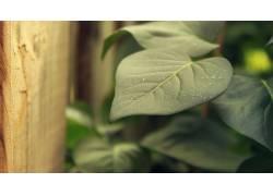 树叶,绿色,植物,壁纸569563