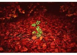 绿色,红,植物,树叶532545
