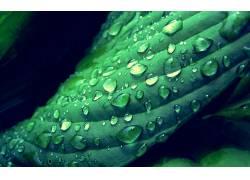 树叶,绿色,水滴,景深,植物,宏6461图片