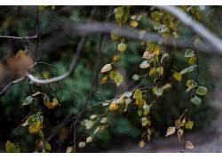 树叶,背景虚化,壁纸,秋季,绿色,植物117634