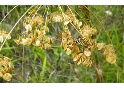 昆虫,花卉,壁纸240593