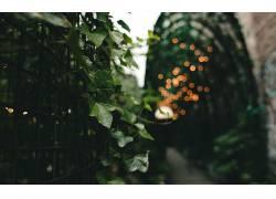 树叶,背景虚化,格,壁纸,景深,植物32314图片