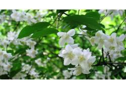 树叶,花卉,植物60074