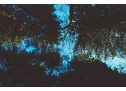 植物,树木,天空284582