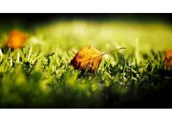树叶,草,宏,植物18390图片