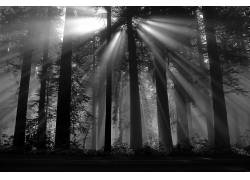 摄影,壁纸,黑森林,太阳光线,黑暗,植物,树木403429