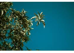 树叶,蓝色,天空,植物,壁纸686041