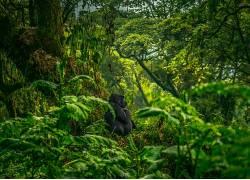 摄影,大猩猩,绿色,树木,植物,望着远处,苔藓382444
