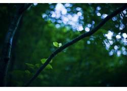 植物,树木,森林,背景虚化452285