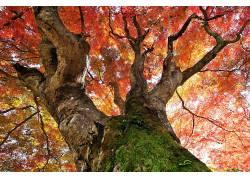植物,树木,秋季338023