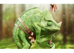 变色龙,爬行动物,动物156137
