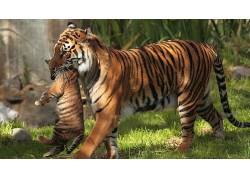 动物,虎,小动物195786