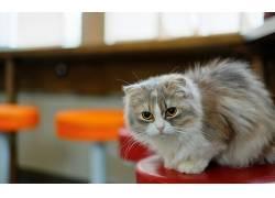动物,猫,黄眼睛,看着观众360572