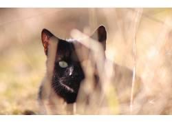 动物,猫,黑猫,景深201798