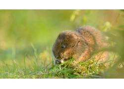 动物,老鼠,草137392