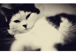 动物,猫,黑眼睛,单色191051