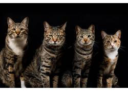 动物,猫,黑色102023