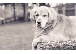 单色,动物,狗122789
