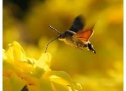 动物,花卉,性质,飞蛾,黄色的花朵151576