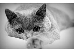 单色,动物,猫163562