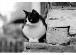 单色,猫,动物,木158408