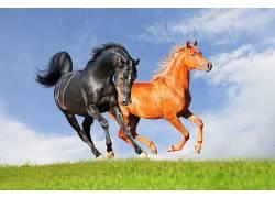 动物,马209181