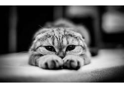 单色,猫,动物244686