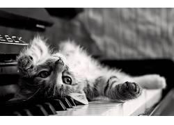 单色,猫,钢琴,上下翻转,动物,小猫66932