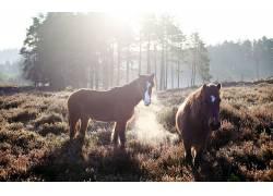 动物,马43292