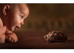 宝宝,动物,龟165839